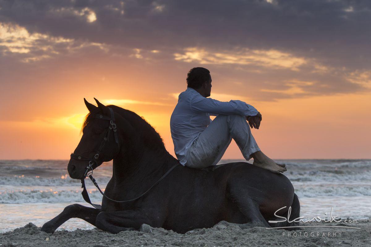 """CURS DE """"NATURAL HORSEMANSHIP"""" APLICAT SI COMPORTAMENT CABALIN"""
