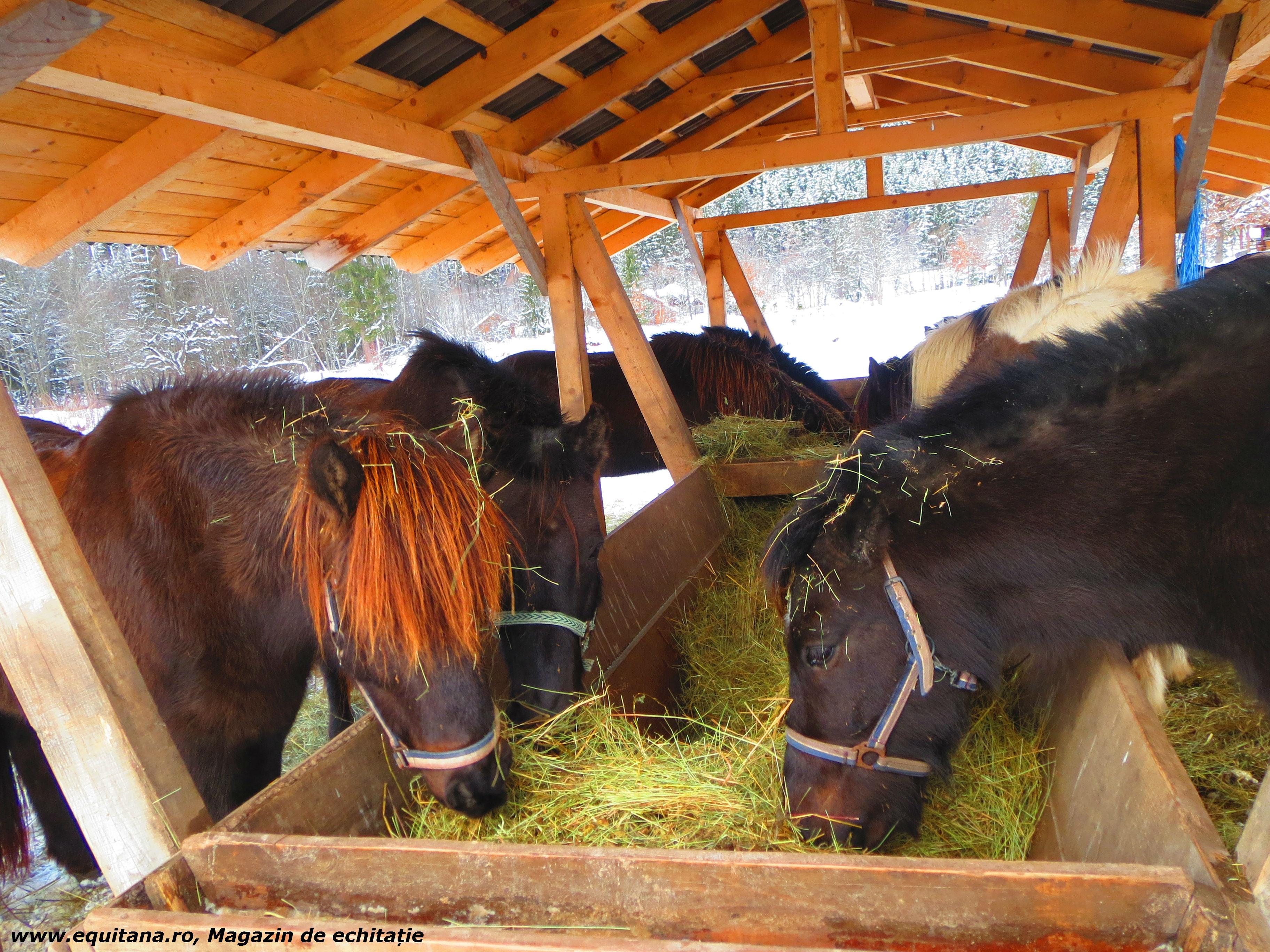 Echitaţie cu cai islandezi, Ivo Riding Ranch, jud. Harghita