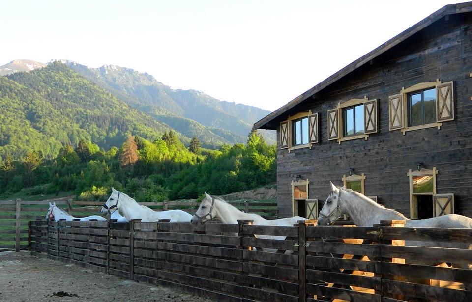 Maggie's Ranch, Centru ecvestru în Valea Glăjăriei, jud. Brașov