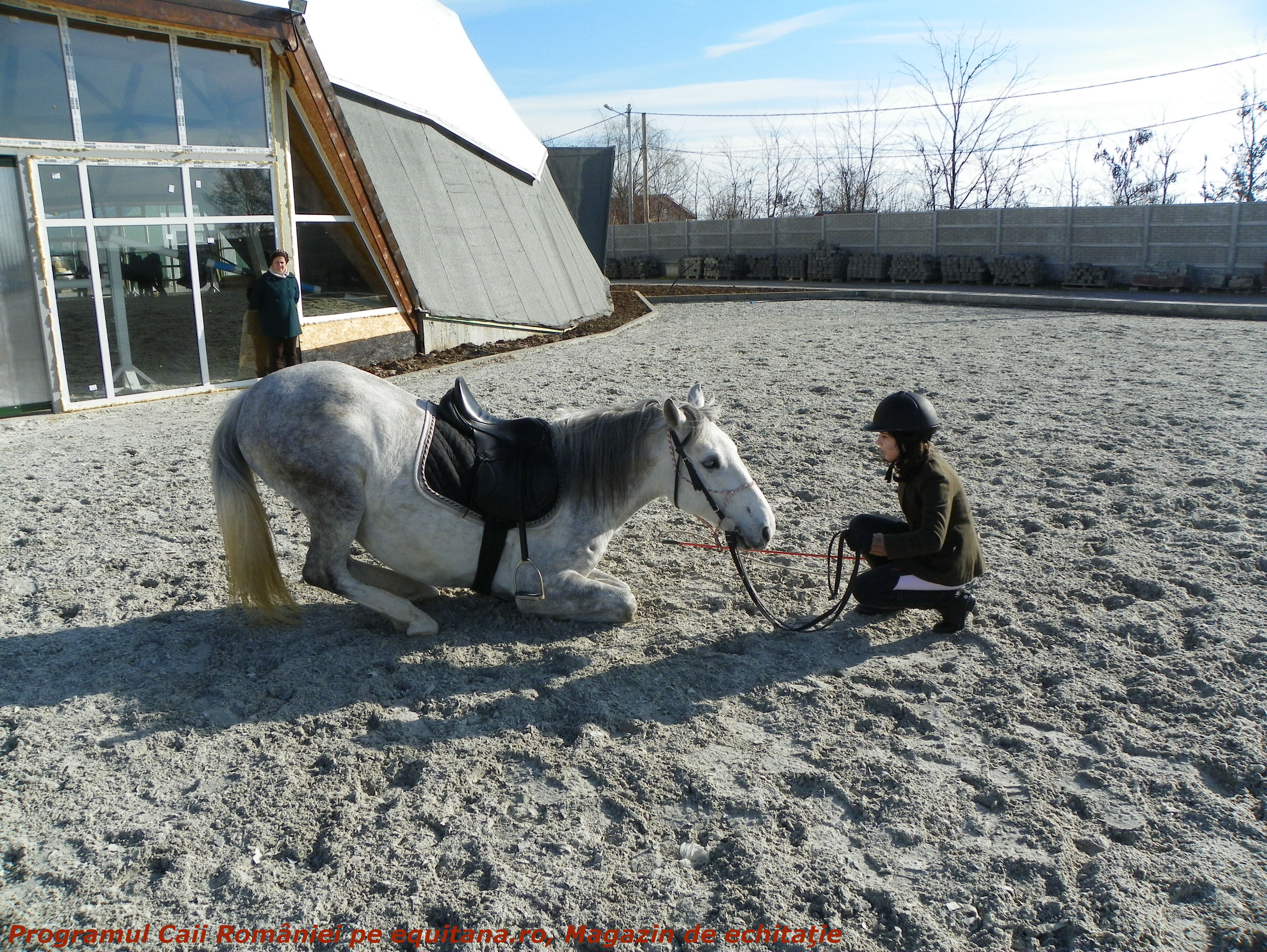 Cursul de dresaj din cadrul Programului Caii României