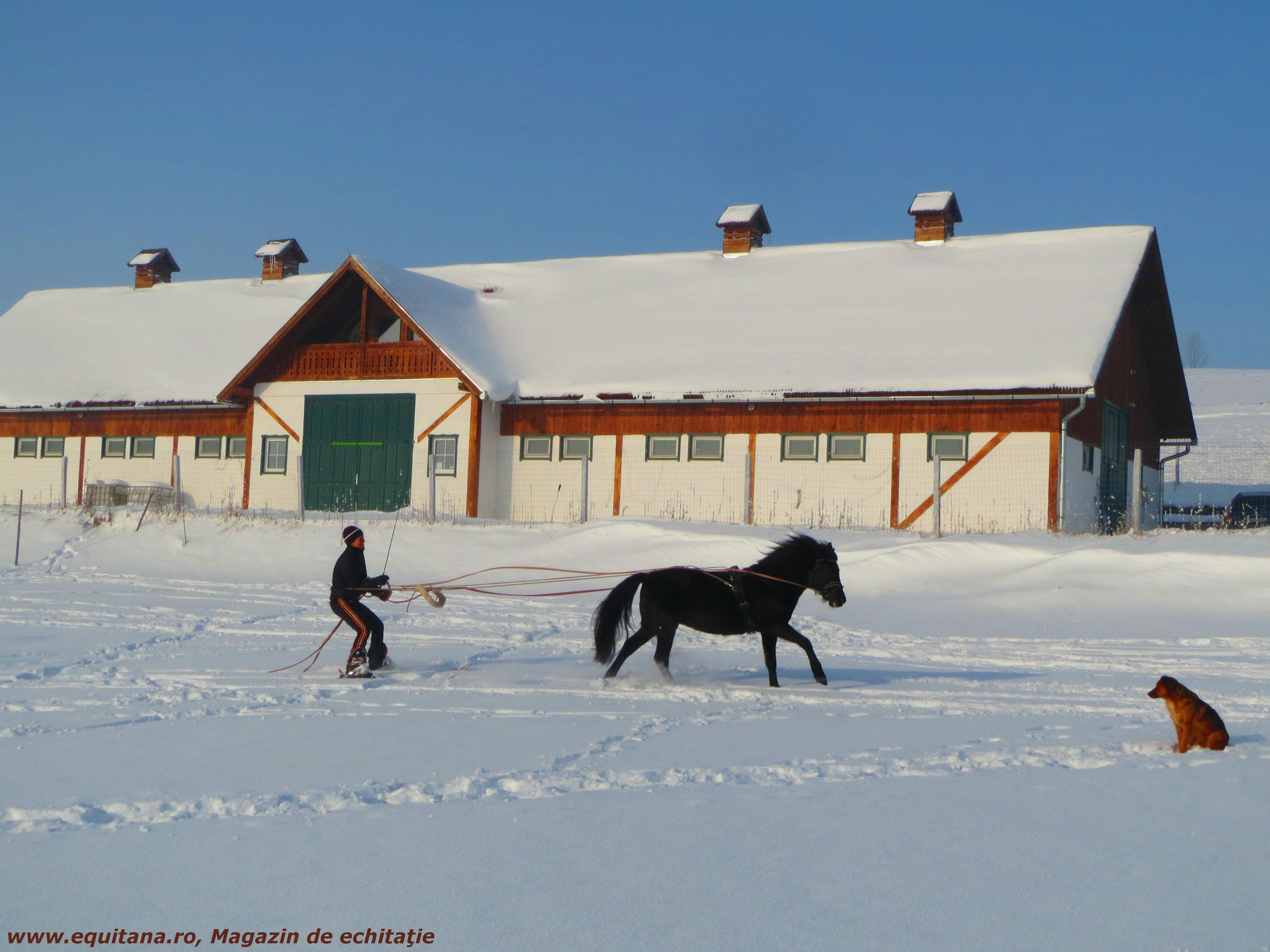 """Sesiuni de """"mângâiere a cailor"""" si Skijoring, Clubul Kavalliera din Jud. Harghita"""