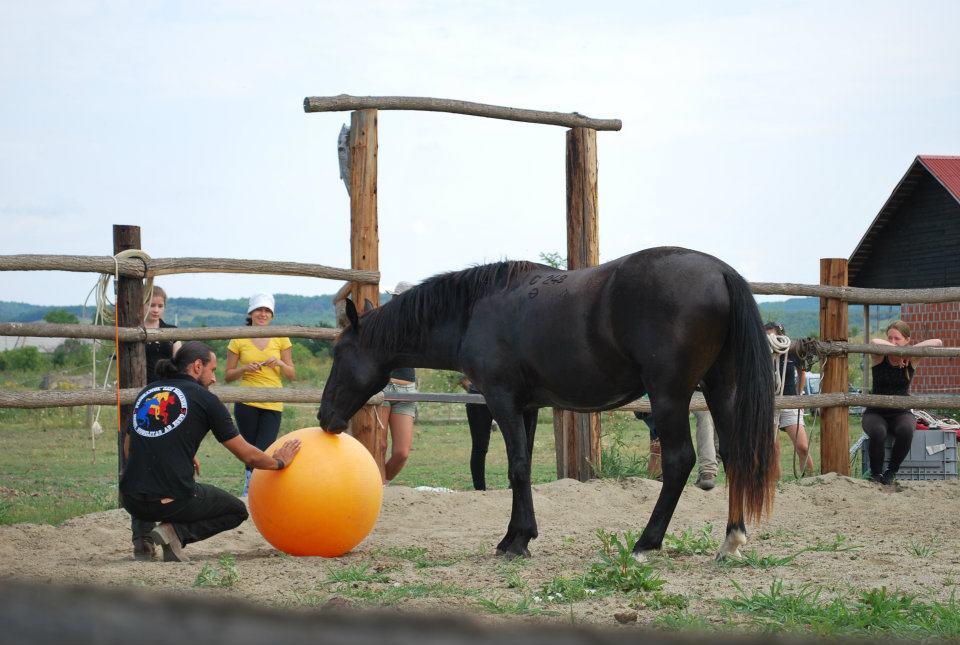 Cai în antrenament, Programul Caii României: Deburajul calului