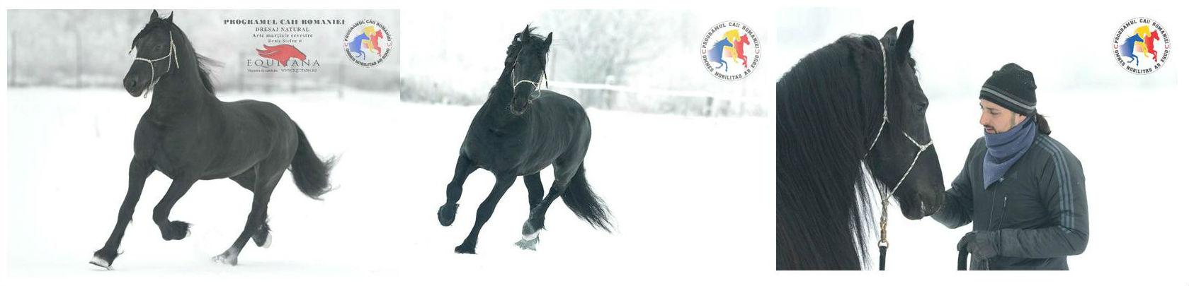 Cai în antrenament, Programul Caii României: Redeburajul unui cal matur