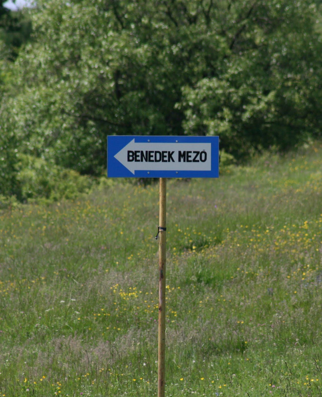 Planuri pentru prima școală de echitație în Ținutul Secuiesc