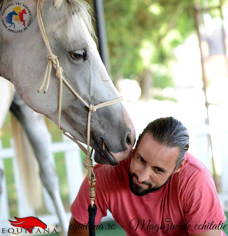 Programul Caii României: Dresajul unui cal matur