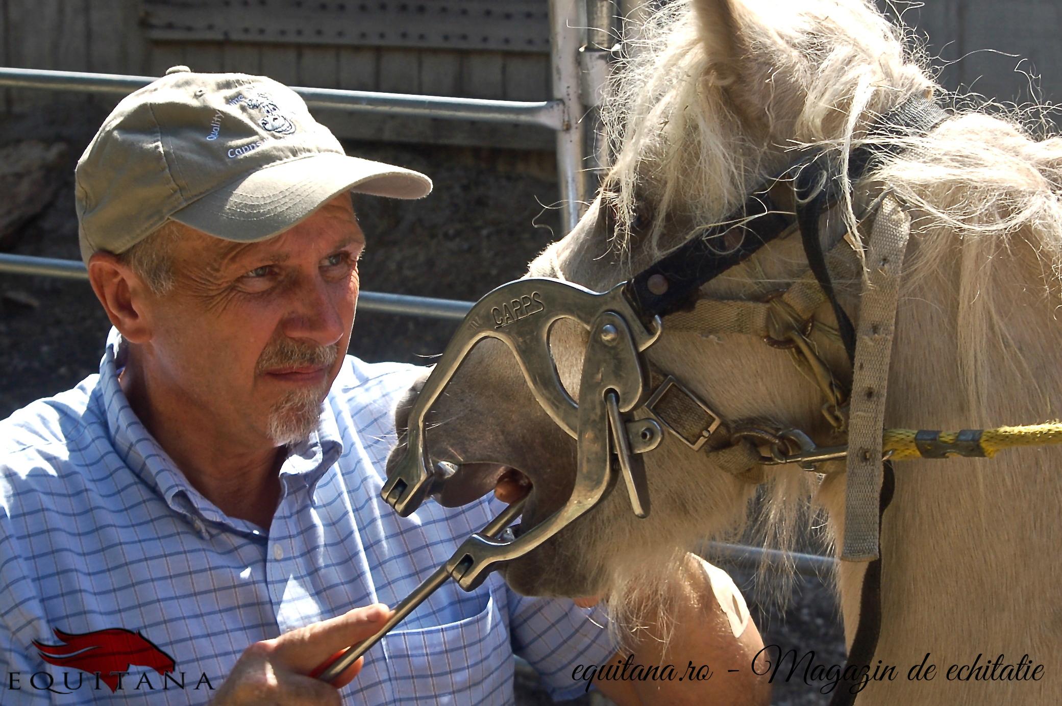Igiena dentară la cai