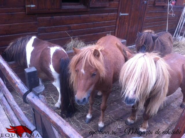 Pensiunea Căsuţa cu ponei