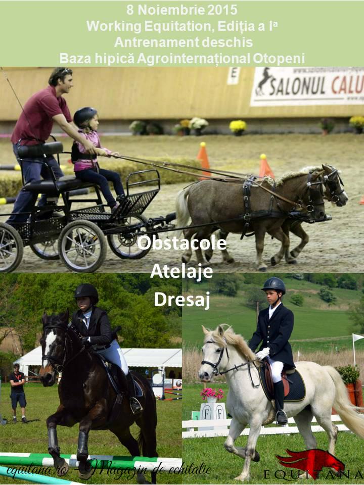 Working Equitation, antrenament deschis