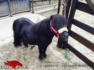 De vânzare: ponei