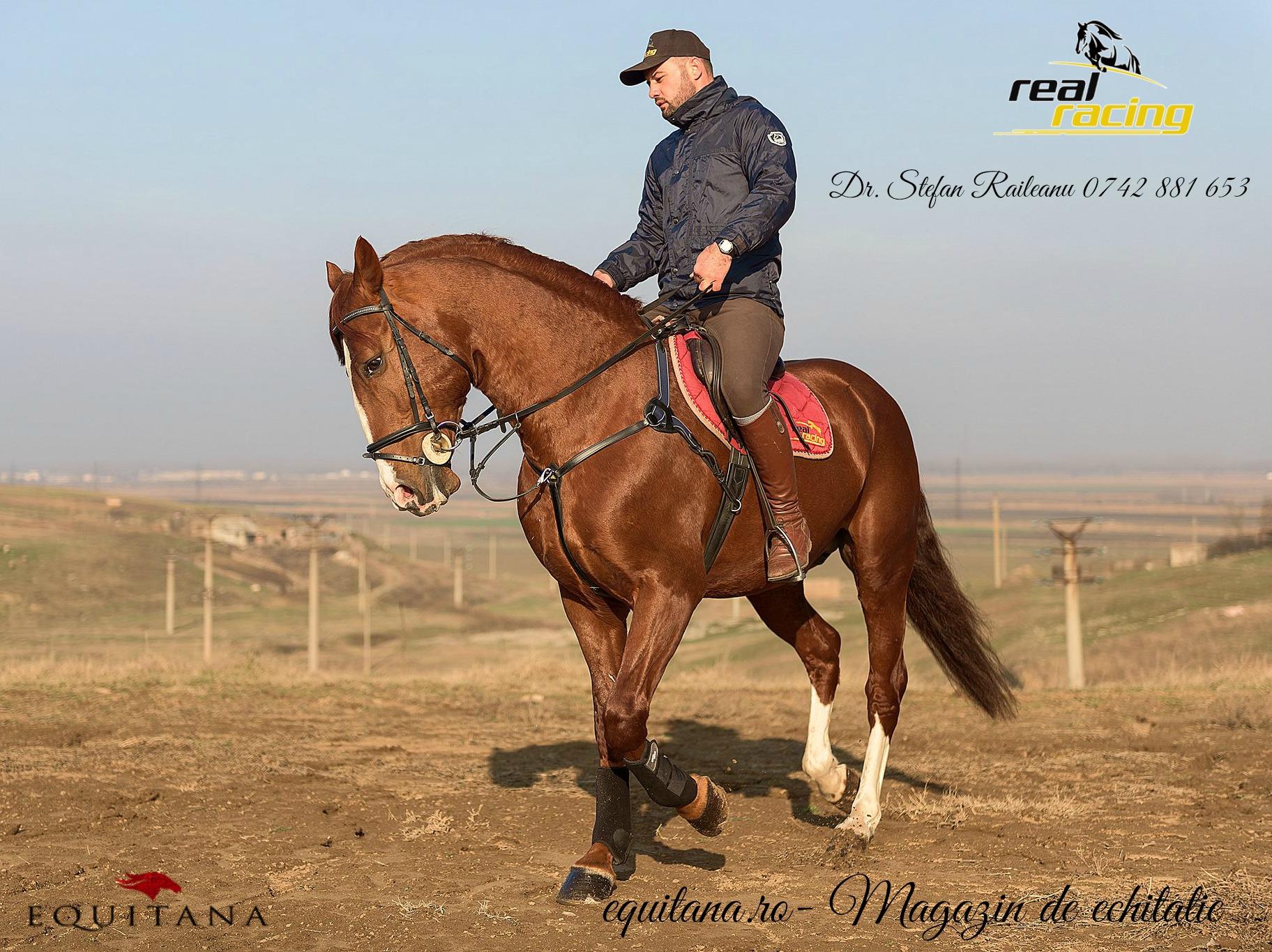 Pregătirea calului de concurs