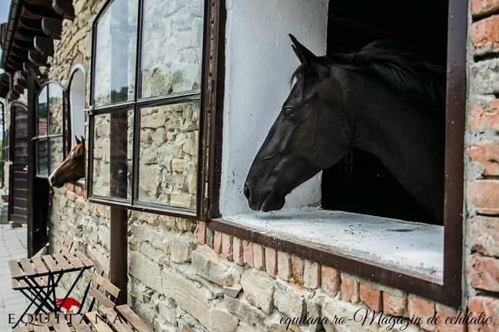 Deschiderea oficială Villa Abbatis Equestrian Center, loc. Apoș, jud. Sibiu