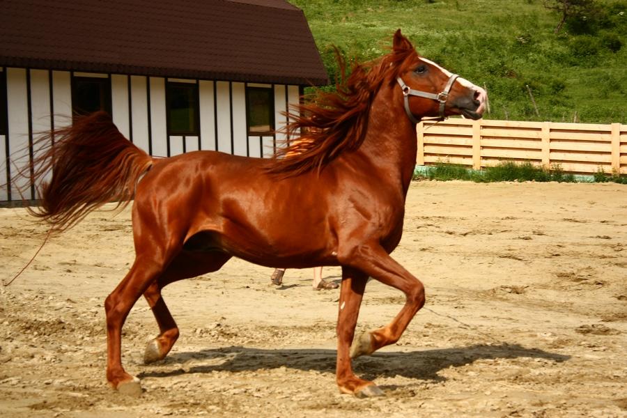 Curs de monitori la Centrul de Echitație Napoca Sport Horse, județul Cluj