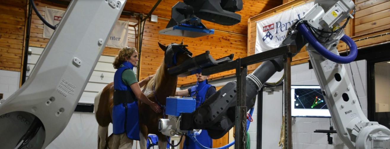Cum revoluţionează roboţii sănătatea cailor?