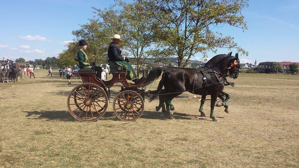 Campionatul național de atelaje cu doi cai, Bodoc, jud. Covasna