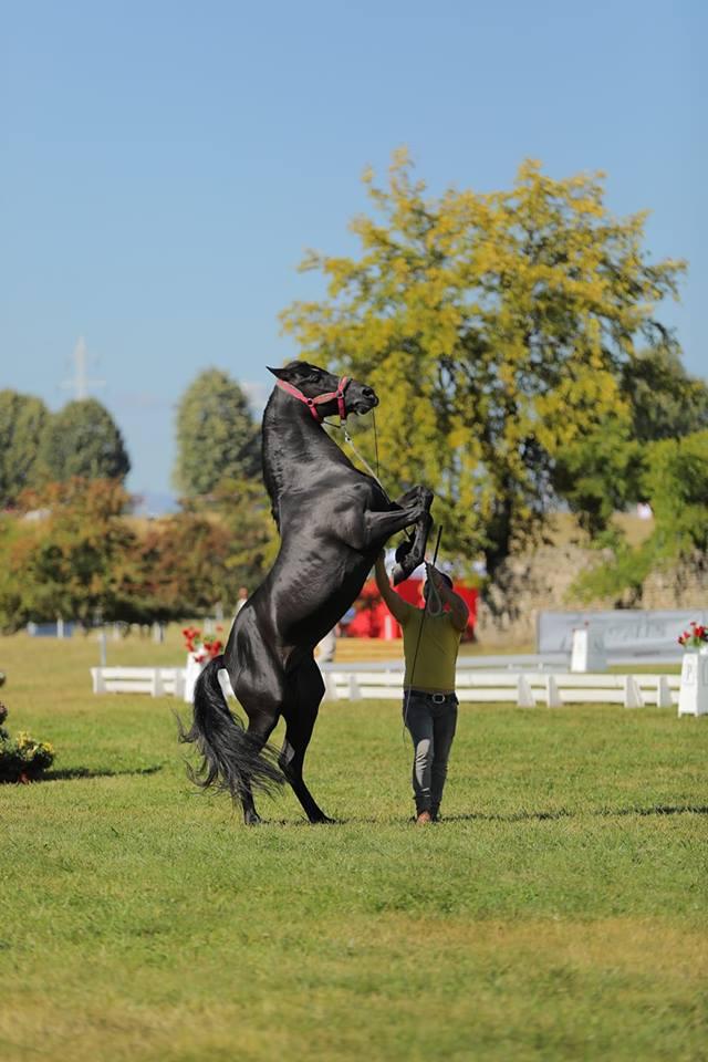 Retrospectiva Karpatia Horse Show 2018