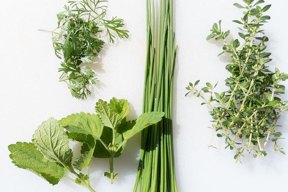 Plantele medicinale în echitație