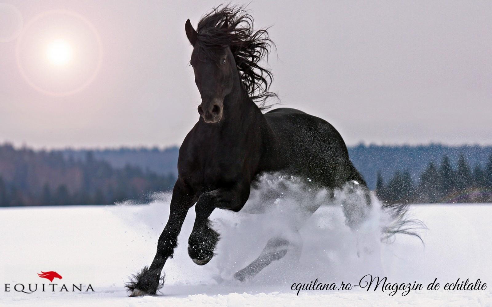 4 lucruri neștiute despre cai iarna