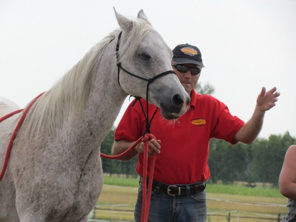 Îmblânzirea cailor înseamnă a înțelege calul