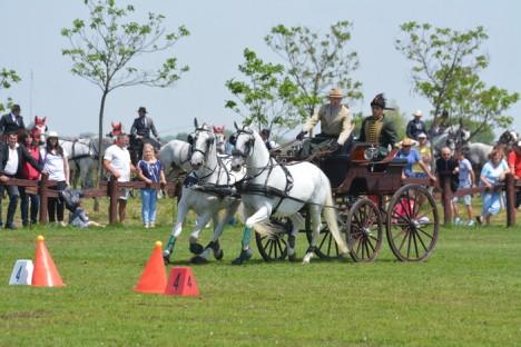 Campionatul Naţional de Atelaje cu doi cai, Etapa a II-a