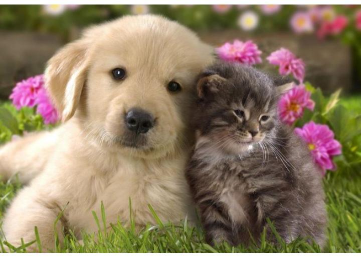 Noutăți: Produse pentru câini și pisici