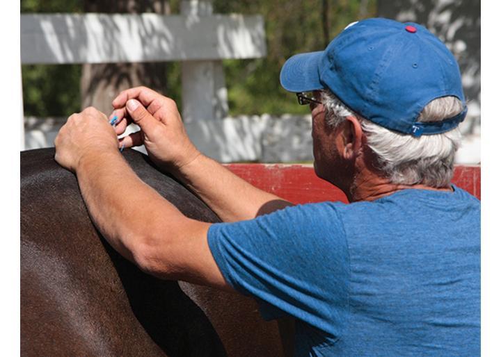 Terapia alternativă la cai
