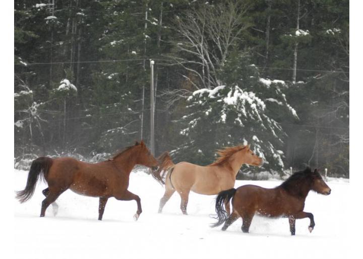 Hrănirea cailor pe timpul iernii