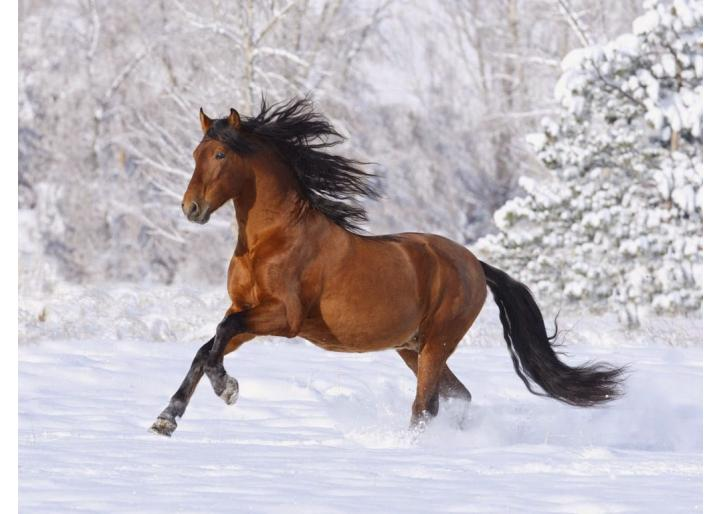 Importanța electroliților la cai