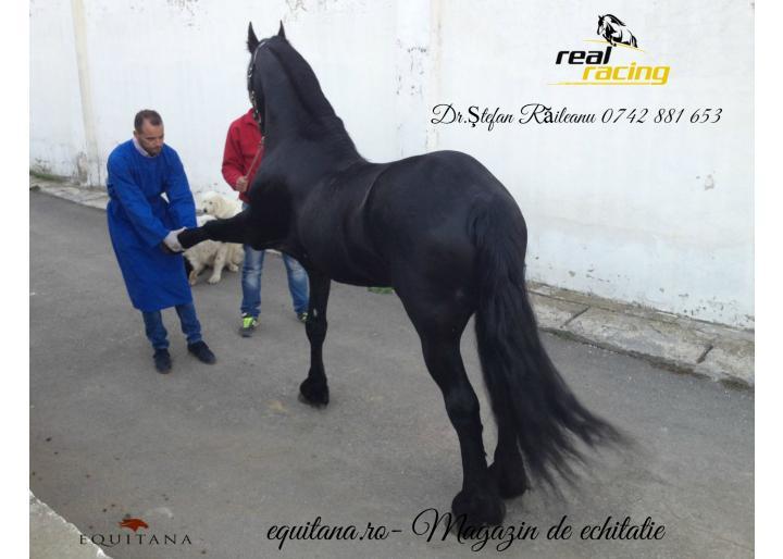 Vaccinarea cailor