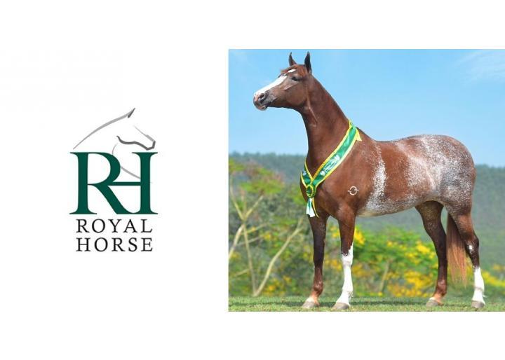 Noutăți: Hrană Royal Horse