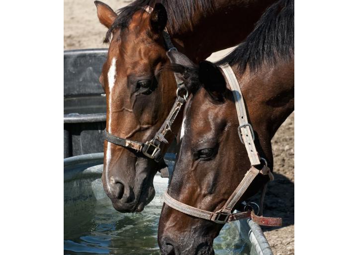 Pregătește-ți calul pentru vară: Hidratarea și stresul termic