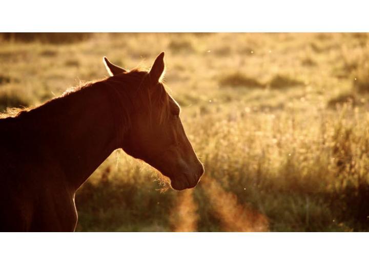 Îngrijirea calului toamna