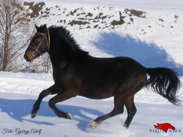 Îngrijirea cailor pe timpul iernii