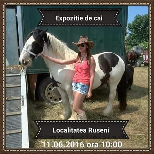 Expoziție de cai, localitatea Ruseni, Satu-Mare
