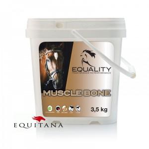 Muscle Bone